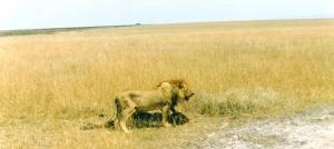 Lion, John Parker, Escape Route