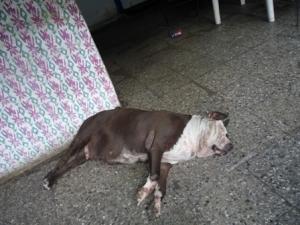 ugly dog1