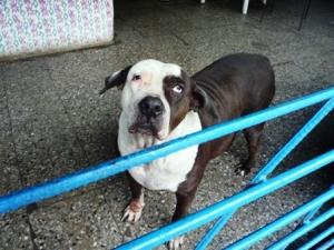 ugly dog2